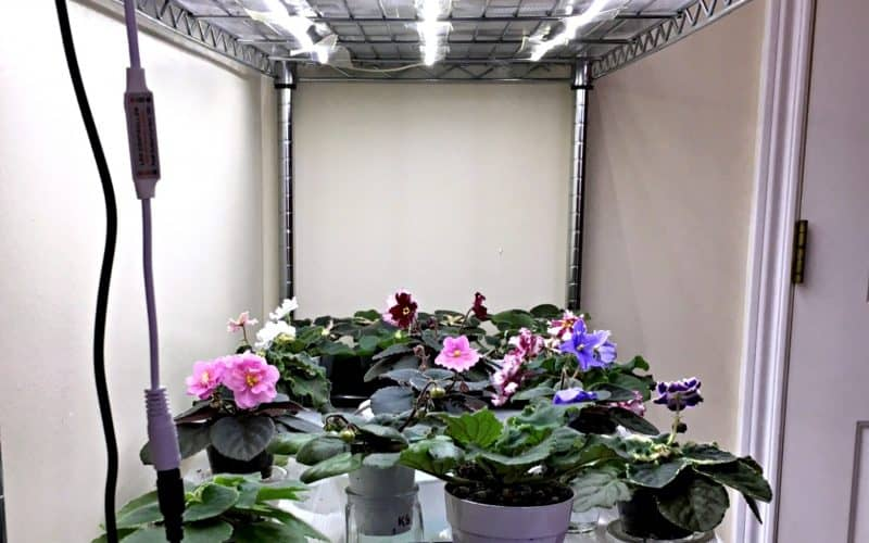 Grow African Violets with LED